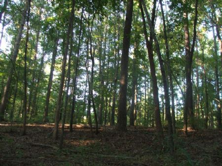 18.1 Acre Hunting Or Rural Getaway : Folsom : Perry County : Alabama
