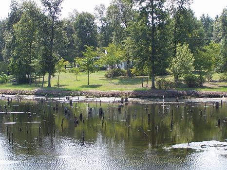 Ulmer - 50 Acres with Home and Pond : Ulmer : Allendale County : South Carolina