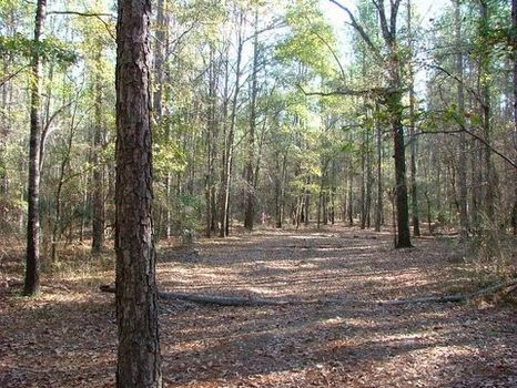 Beautiful 45 Acres with Branch : Statesboro : Bulloch County : Georgia