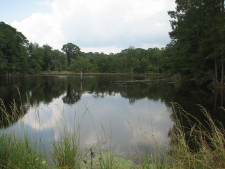 368+/- Acres with 2 Ponds & Creek : Claxton : Evans County : Georgia