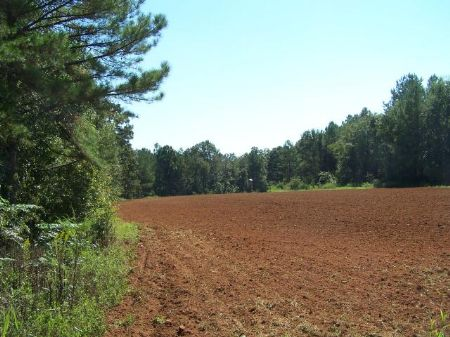 125 Acre Hunting Tract : Americus : Sumter County : Georgia