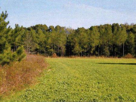 227+/- Acres : Waynesboro : Burke County : Georgia