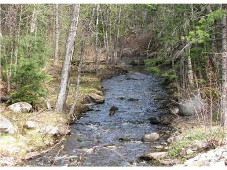 Trout Fishing On Ebhorse Stream : Chester : Penobscot County : Maine