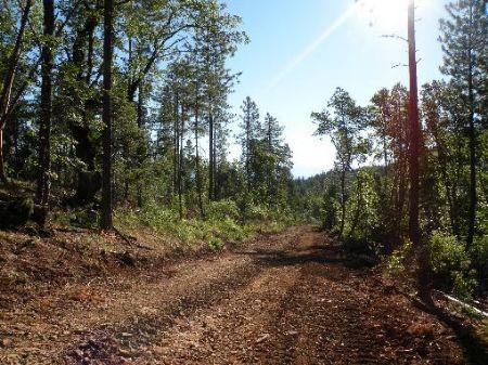 Mountain Homesite : Butte Falls : Jackson County : Oregon