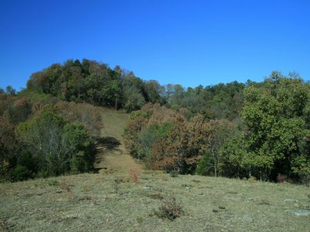 High Fenced 139 Acres : Lafayette : Macon County : Tennessee