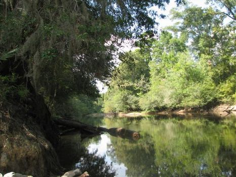 658+/- Acres on the Ogeechee River : Millen : Jenkins County : Georgia