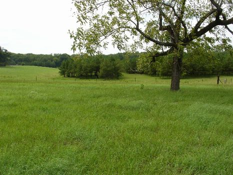 36.2 Acres : Union Springs : Bullock County : Alabama