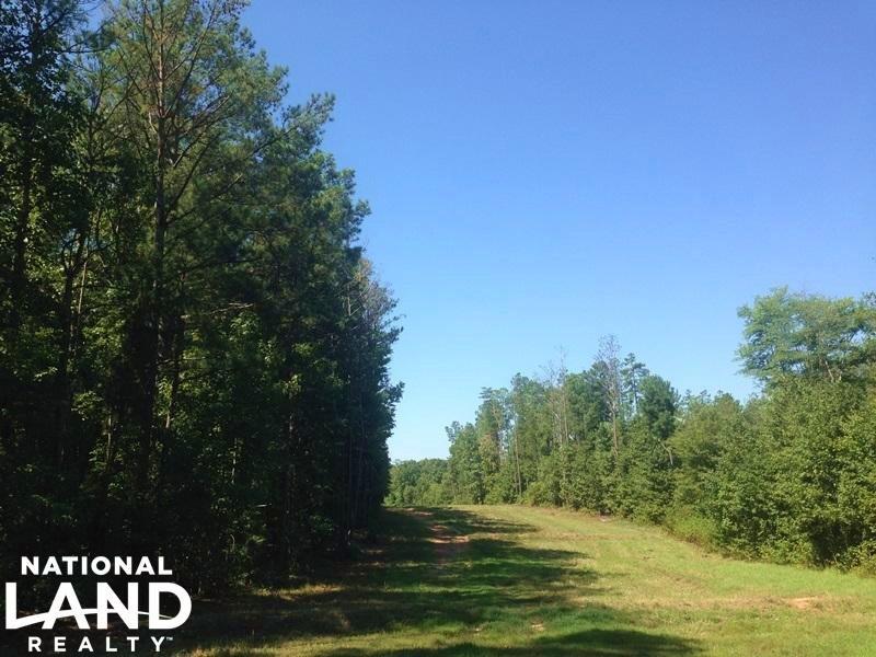 Tallapoosa Recreational Timber Trac : Tallapoosa : Haralson County : Georgia