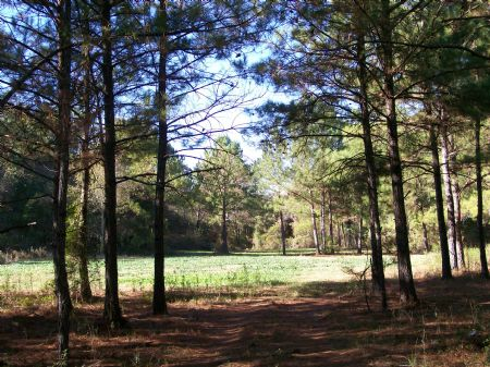 127 Acres : Plains : Sumter County : Georgia
