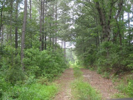 791 Ac Timberland W/ Large Pond : Emporia : Greensville County : Virginia