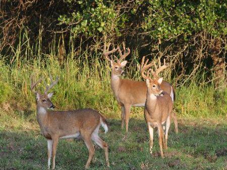 Outstanding Hunting Property : Wellington : Elk County : Kansas