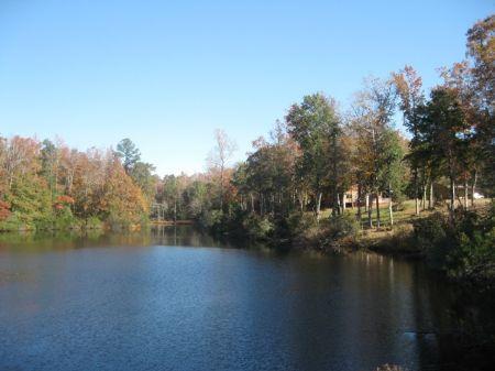Halfway Swamp Tract : Saint Matthews : Calhoun County : South Carolina