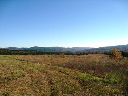 Land Adjacent To National Forrest : Redding : Franklin County : Arkansas