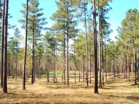 Full Branch Farm 24.38 +/- Acres : Madison : Morgan County : Georgia