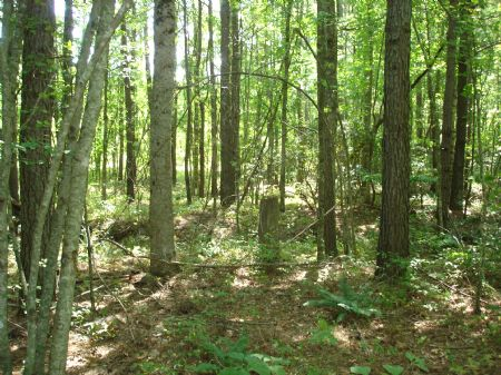 Nice Tract With Great Options : Crossville : Van Buren County : Tennessee