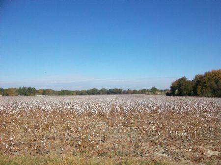 53 Acres Farm Or Development : Pineview : Wilcox County : Georgia