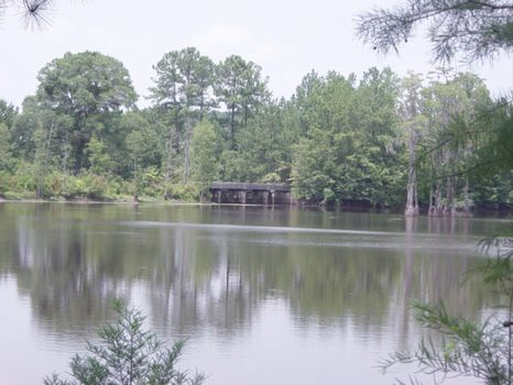 1000 Acres | Cypress Lake Tract : Eastman : Dodge County : Georgia