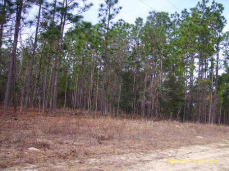 5.7 Acres (cl206) : Hawthorne : Alachua County : Florida