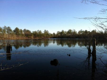 78 Acres With Lake, Field & Timber : Wrightsville : Johnson County : Georgia