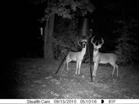380 Acre Wildlife Haven : Mountain View : Stone County : Arkansas