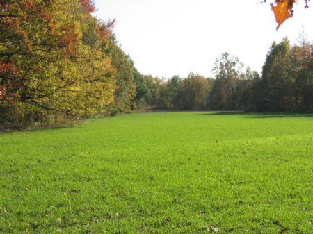 40 Acre Hunting Spot : Marvell : Phillips County : Arkansas