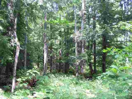 Tbd Emily Lake Road  Mls #1057276 : Twin Lakes : Houghton County : Michigan