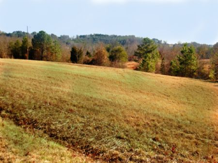 30 Acres On Old Bear Creek Road : Chesnee : Spartanburg County : South Carolina