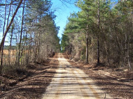 The Nelson Tract 473 +/- Acres : Mitchell : Glascock County : Georgia
