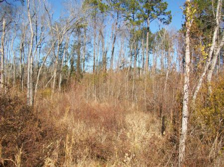 145 Acres Investment Farm Tract : Kite : Johnson County : Georgia