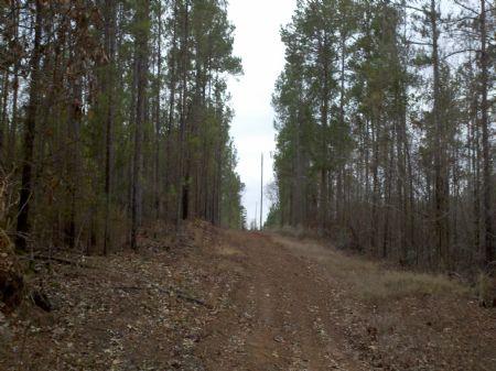 Jmr Walnut Tree : Union : Union Parish : Louisiana