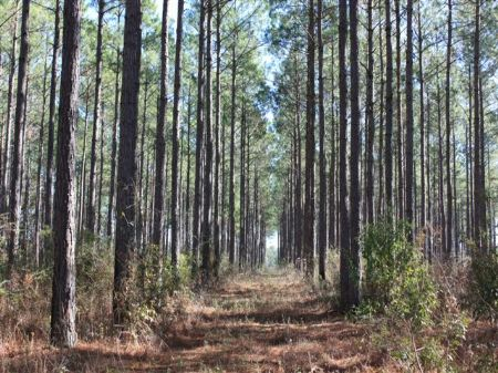 490 Ac Recreation Track : Pavo : Thomas County : Georgia