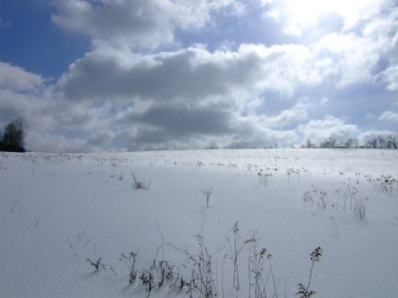 66+ Acres Farmland No Gas Lease : Willet : Cortland County : New York