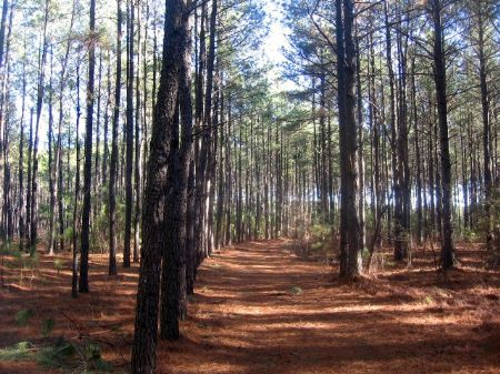 Convenient Timber/recreational Trac : Sandersville : Washington County : Georgia