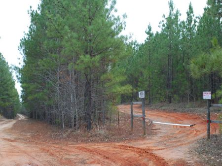 204 Acre Timber Tract : Carlisle : Union County : South Carolina