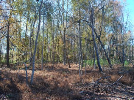 Recreational Tract Near Nat. Forest : Union : Union County : South Carolina