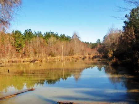 Waterfowl Paradise With Pine Timber : Sandersville : Washington County : Georgia