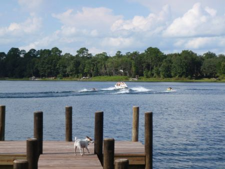 220 Acres On Vause Lake : Hawthrone : Putnam County : Florida
