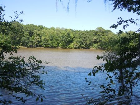 173+/- Acres River Front : Springfield : Effingham County : Georgia