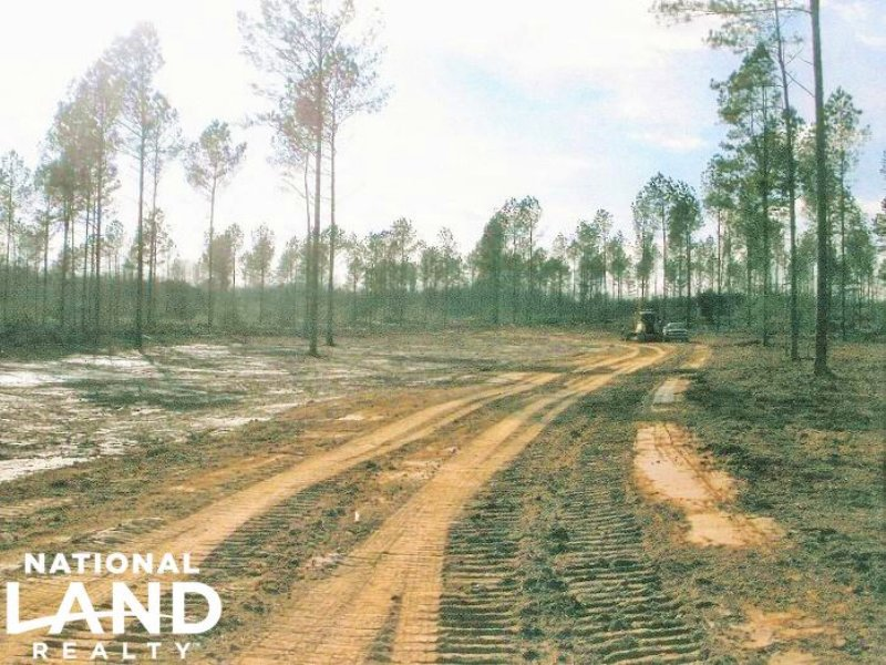 Recreational And Timber Land : Forest : Scott County : Mississippi