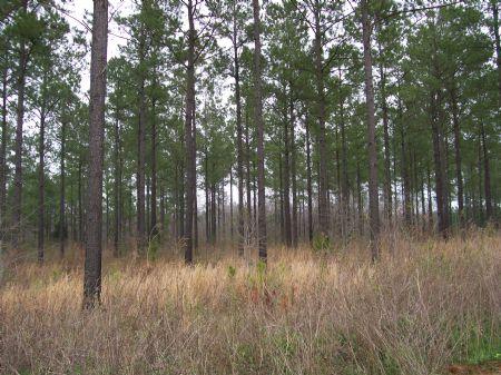 Great Hunting & Homesite : Sasser : Terrell County : Georgia