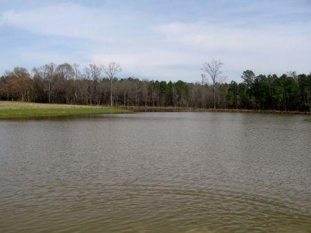 164 Acres Farm : Warrenton : Warren County : Georgia