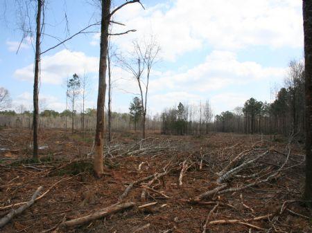 100 Acres Investment : Forest : Scott County : Mississippi
