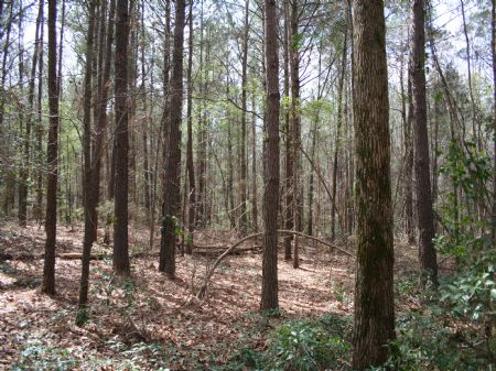 30 Acres Country Living : Forest : Scott County : Mississippi