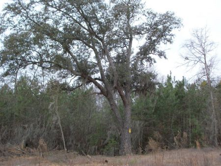 59 Acres, 147500 : Sumter : Sumter County : South Carolina