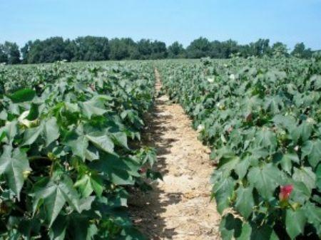 Nice Farm In St. Charles - Wysacky : St. Charles : Lee County : South Carolina