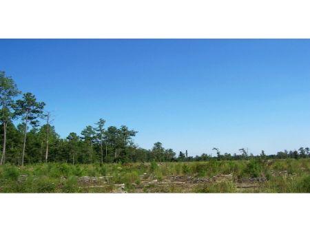 36 Acres : Dunbar : Marlboro County : South Carolina