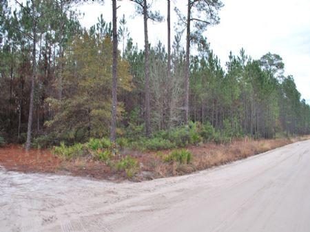 Big House Road Tract : Blackshear : Pierce County : Georgia