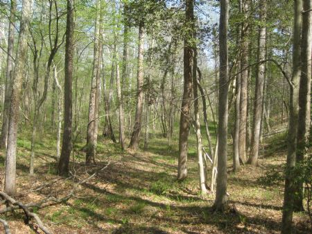 263 Acre Timberland Investment : Lawrenceville : Brunswick County : Virginia