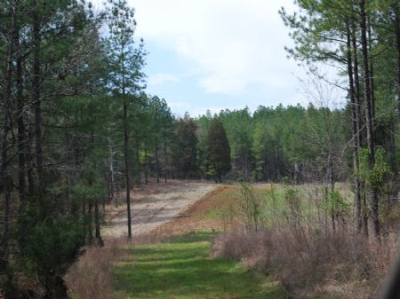 385 Acre Timberland / Recreational : Union : Union County : South Carolina