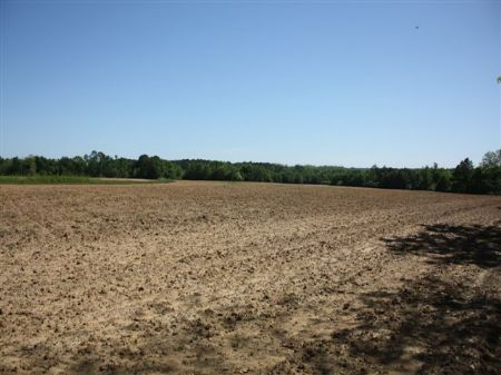 263.5 Acre Dry Land Farm : Cairo : Thomas County : Georgia
